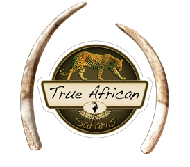 For the Safari of a Lifetime